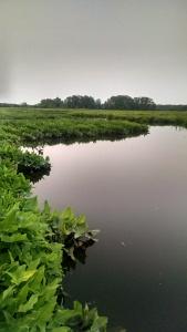 Canoe blog marsh