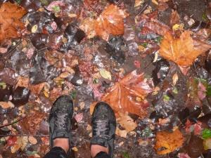 Meerwald shoe hike