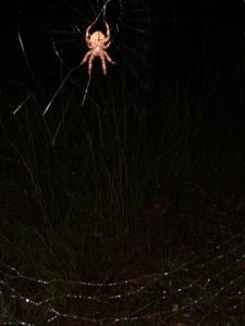 Meerwald Spider island